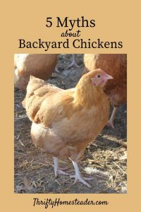 myths about chickens