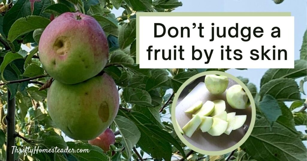Don't judge a fruit by its skin