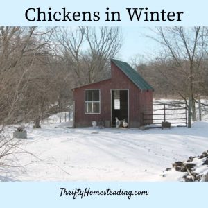 chicken house in snow