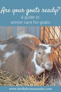 Goats in Winter Pinterest