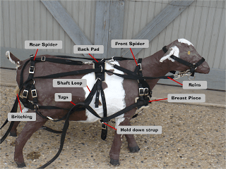 Goat harness diagram