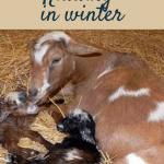 Kidding in Winter Pin
