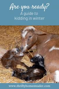 kidding in winter Pinterest