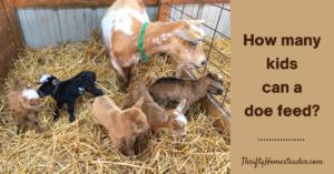 How many kids can a doe feed