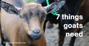 7 things goats need