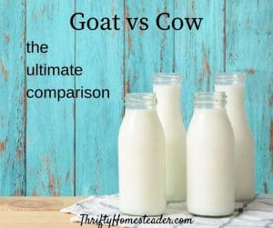 goat vs cow milk