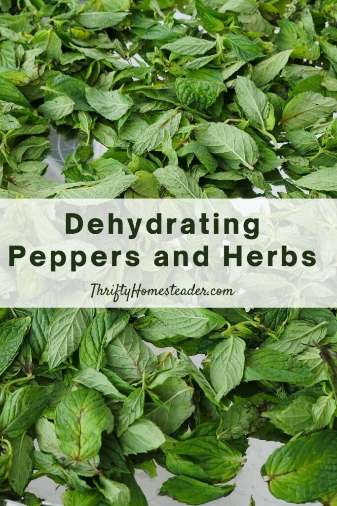 dehydrate peppers and herbs