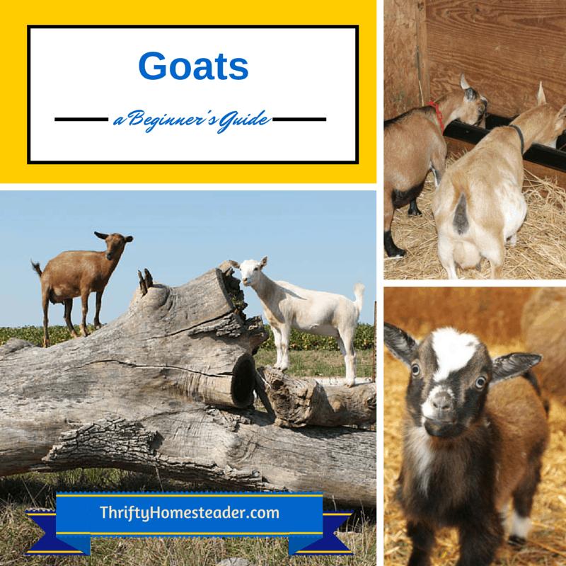 Goat Guide