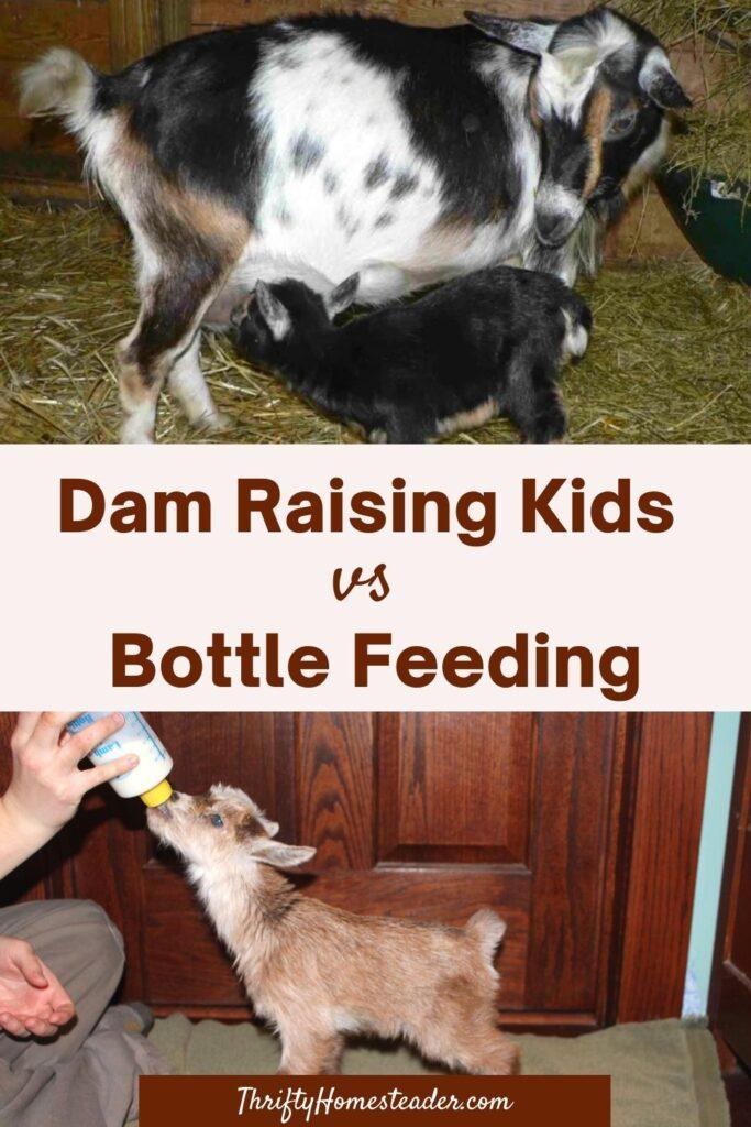 dam raised vs the bottle