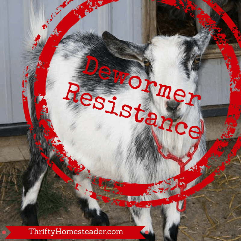 Dewormer resistance in goats