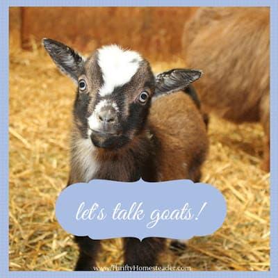 Raising Goats Naturally webinar Wednesday night
