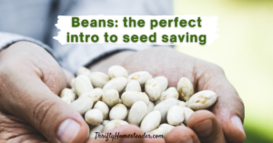 Beans_the perfect intro to seed saving