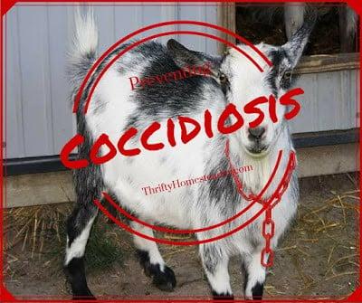 Preventing coccidiosis