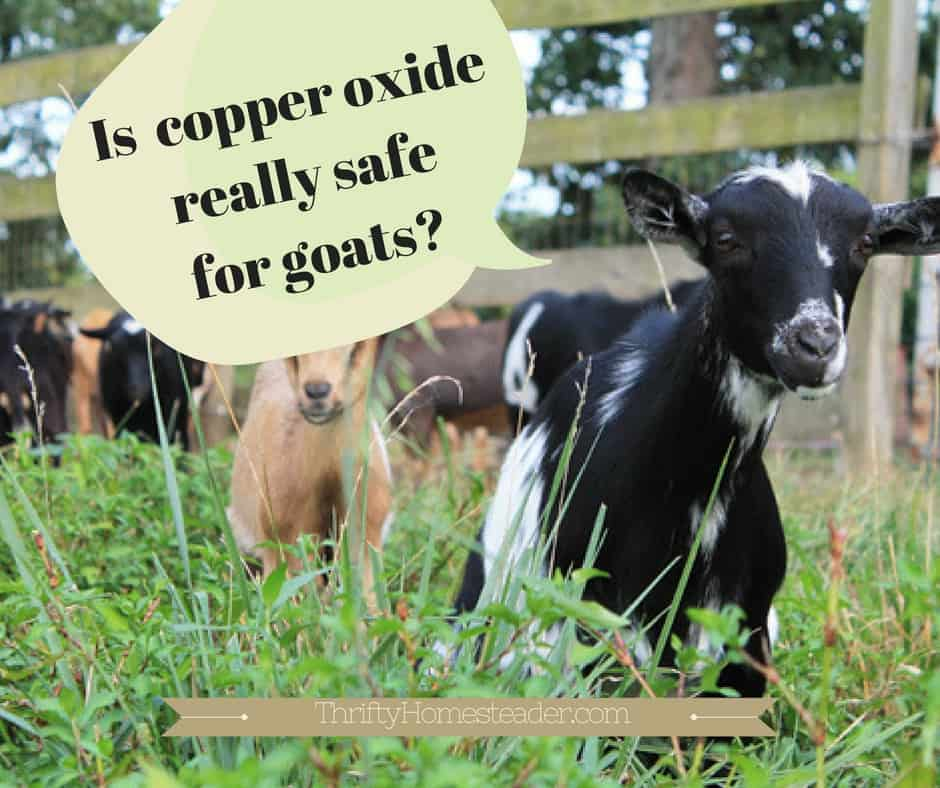 Is copper oxide really safe for goats?