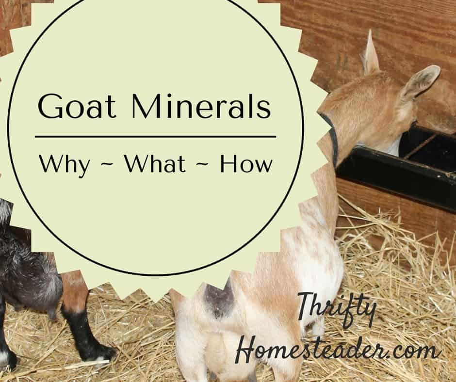 Goat minerals: why, what, and how