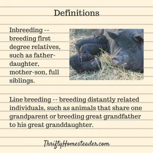 inbreeding livestock
