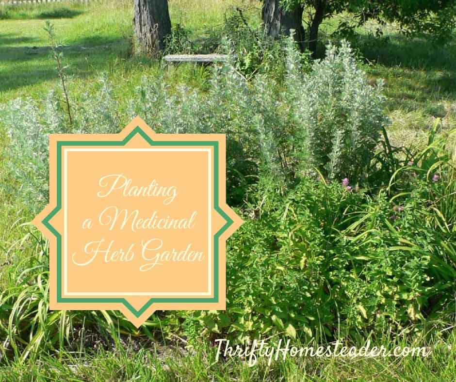 Planting a medicinal herb garden