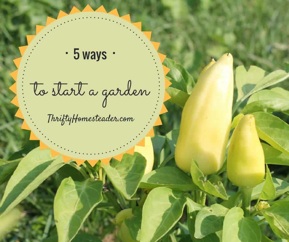 5 ways to start a garden