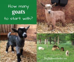 how many goats