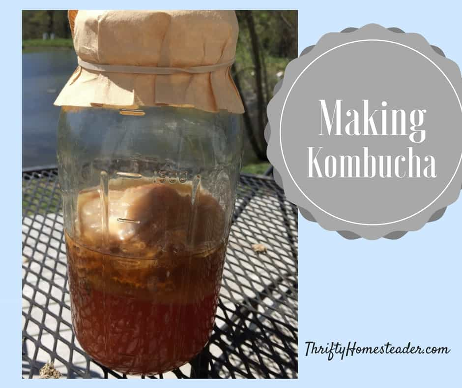 Sneak peek: Making kombucha