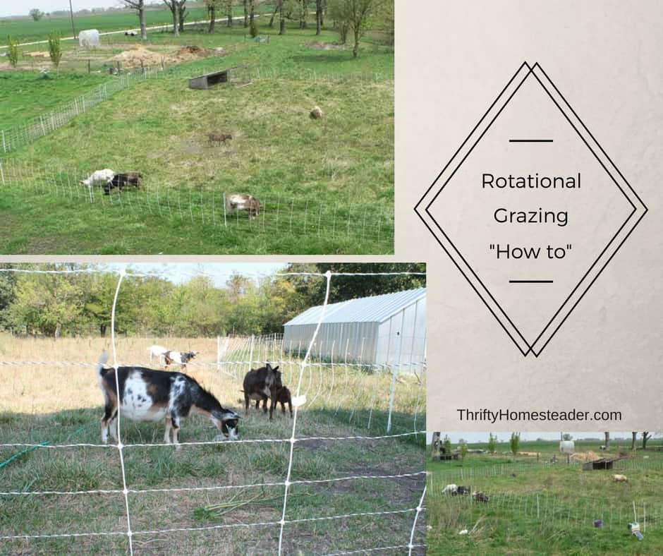 Rotational grazing: How do you DO it?