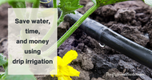 Save water, time, and money using drip irrigation