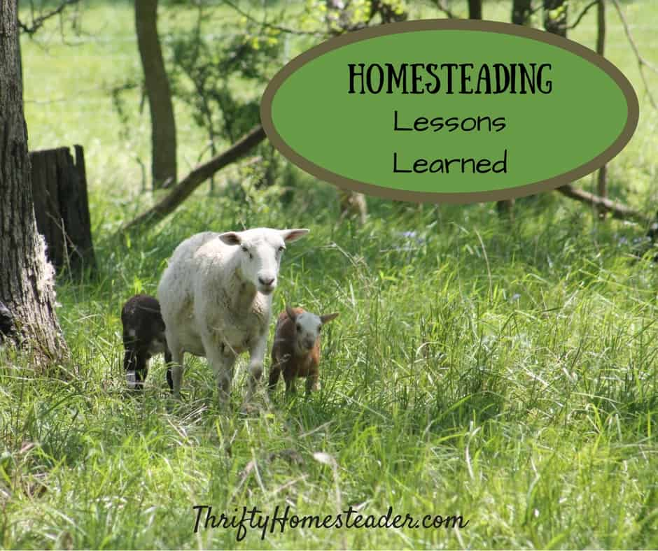 homesteading lessons