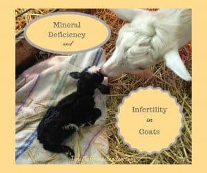 mineral deficiency goats