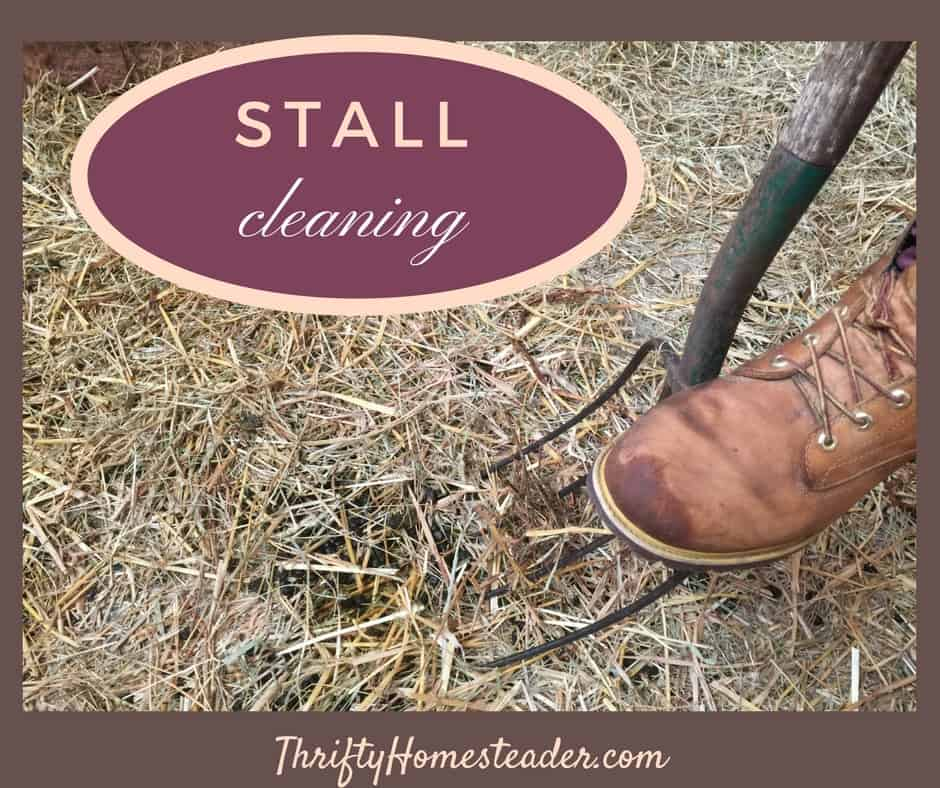 Stall cleaning: A necessary part of homesteading
