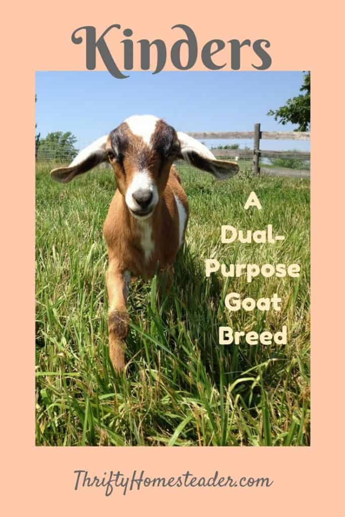 Kinders: A Dual-Purpose Goat Breed