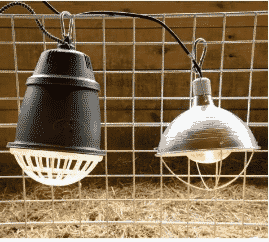 Heat Lamps Safety And Livestock The Thrifty Homesteader