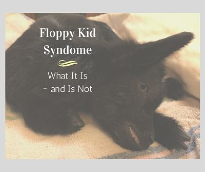 What Floppy Kid Syndrome Is — and What It Is Not