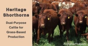 Heritage Shorthorns Dual-Purpose Cattle for Grass - Based Production
