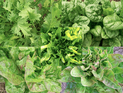Southern Exposure Spring Mesclun Collection Giveaway