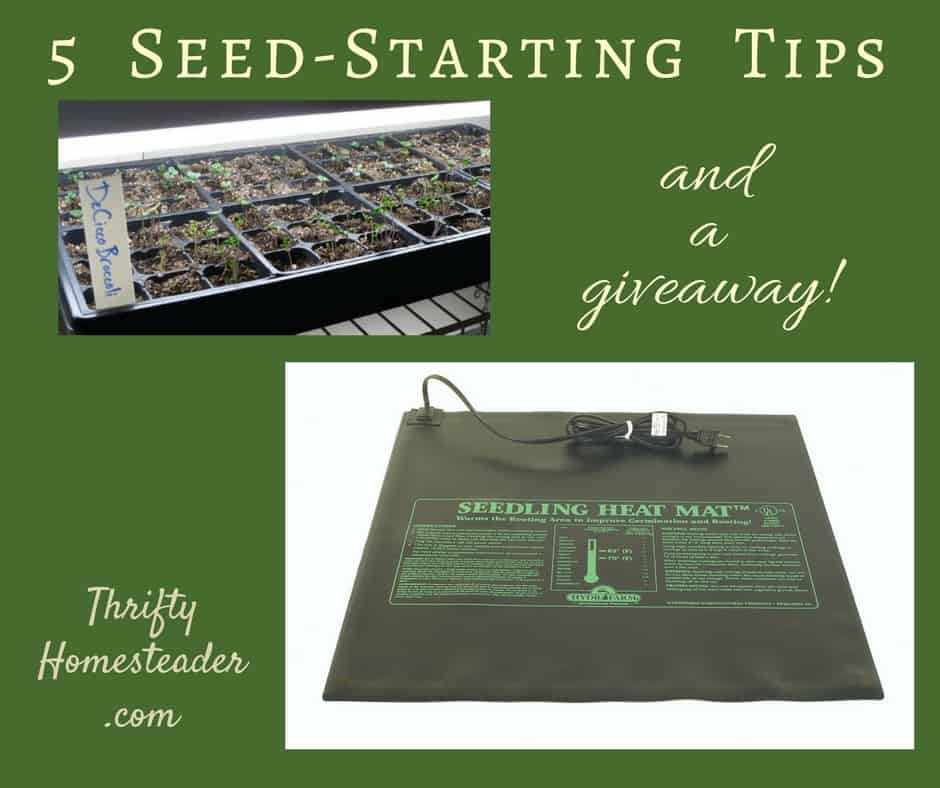 Save a Fortune by Starting Your Own Seeds