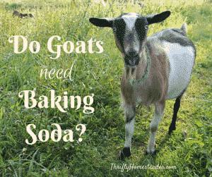 goats baking soda