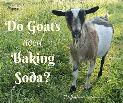 goats baking soda