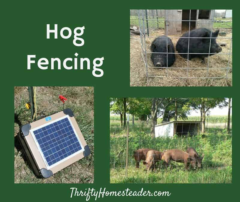Hog Fencing - The Thrifty Homesteader