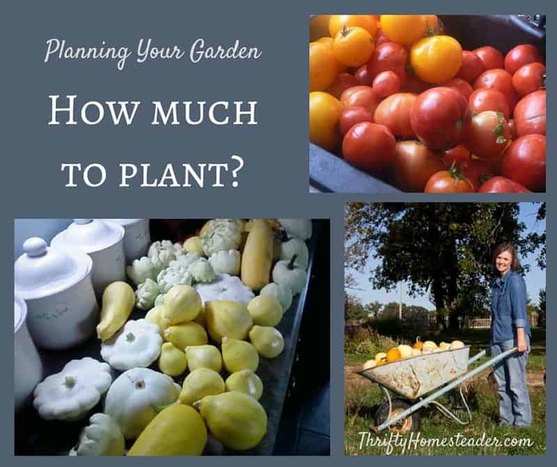 how many vegetables to plant