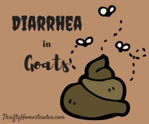 diarrhea in goats