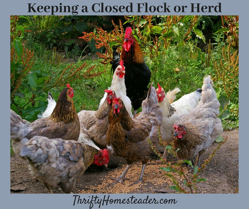 closed flock