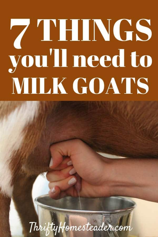 What you need to milk goats