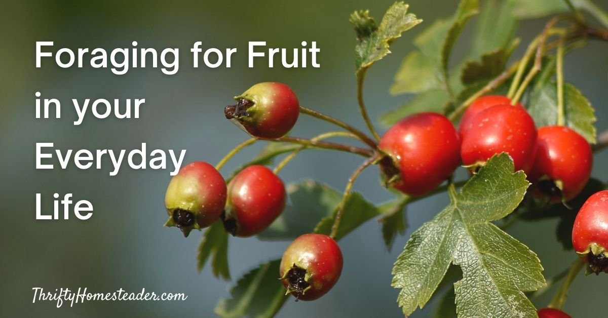 oraging for Fruit in your Everyday Life