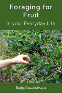foraging fruit in your everyday life