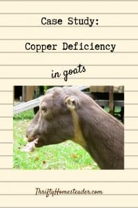 copper deficiency in goats