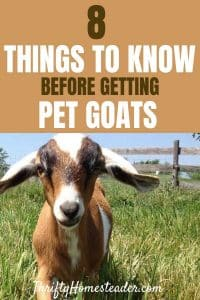 What to know before buying goats for your homestead