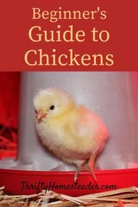 Guide to Chickens