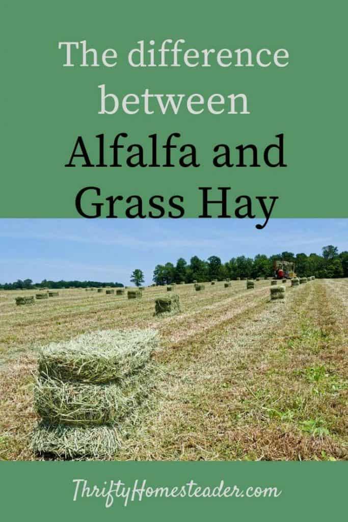 alfalfa and grass hay