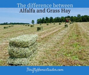 alfalfa and grass hay