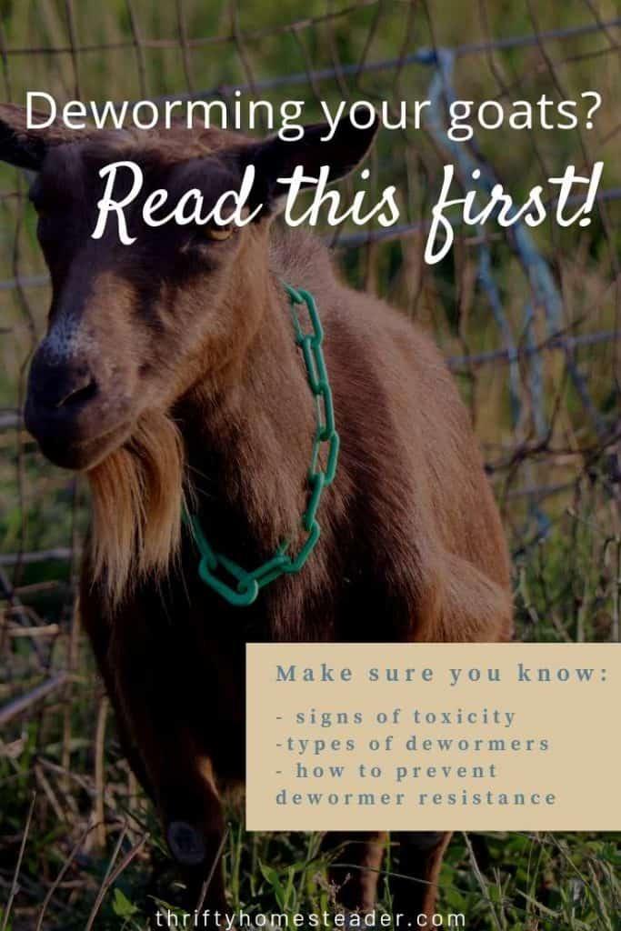 goat deworming